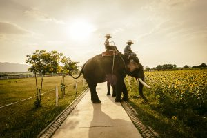 lifestyle photography Thailand outdoor with elephant