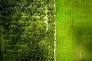 aerial photography coconut plantation thailand